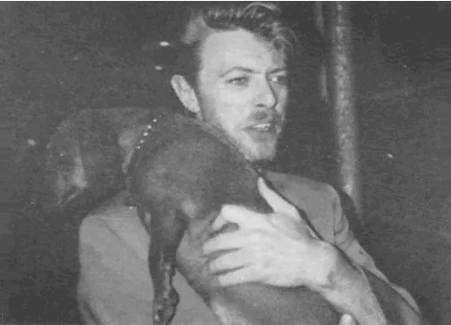 david bowie and his dachshund