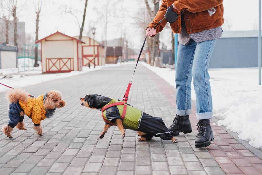 how to train an aggresive dog