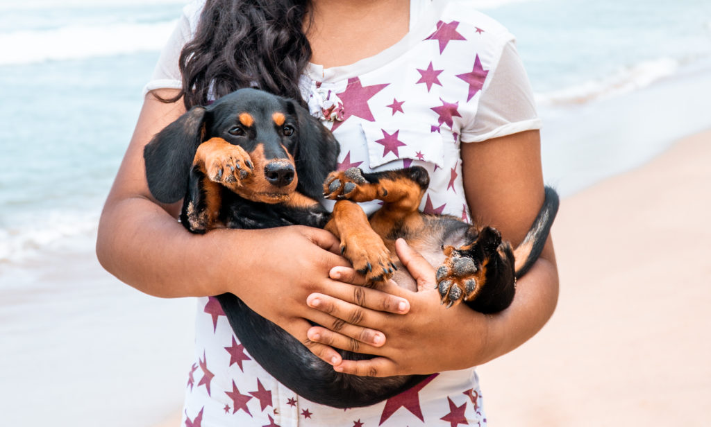 Dachshunds are incredibly loyal, but also needy